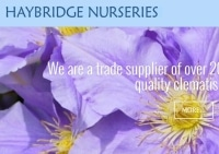 HAYBRIDGE NURSERIES